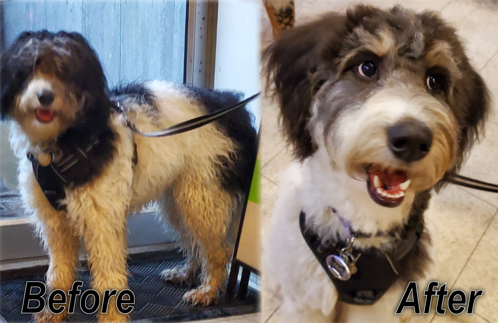 Before and After Grooming Services